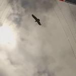 Volar con un cóndor
